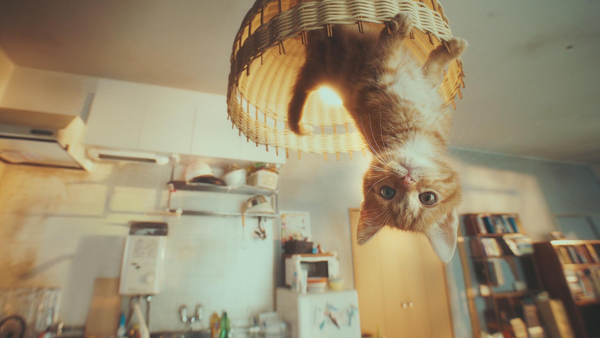 Thumbnail for Gravity Cat