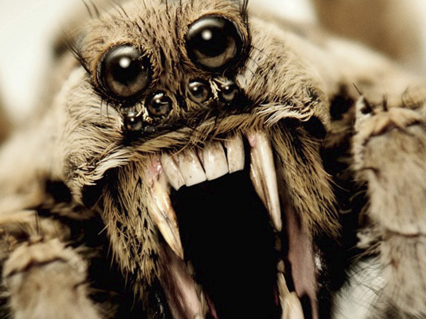 Image for American Horror Story - Roanoke teaser billboard (wolf spider)