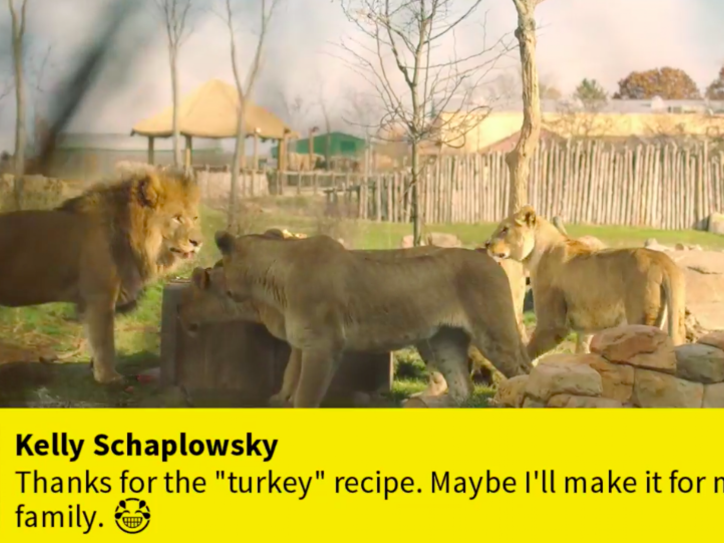 Nat Geo WILD's Savage Thanksgiving (Facebook Live) Thumbnail
