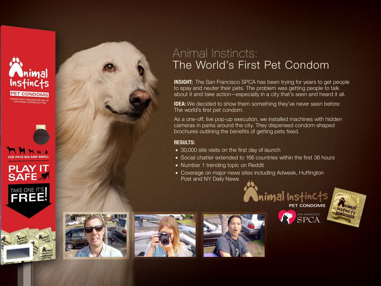 San Francisco SPCA Animal Instincts Pet Condoms Thumbnail
