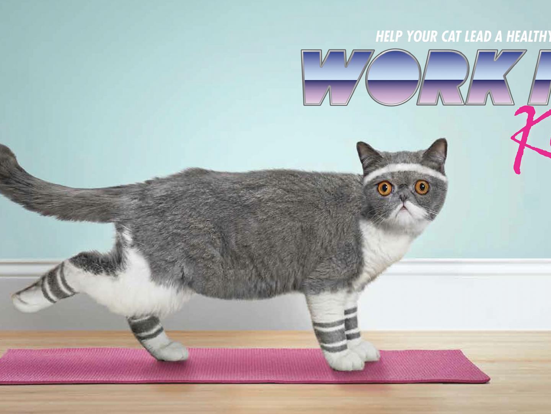Work It Kitty Thumbnail
