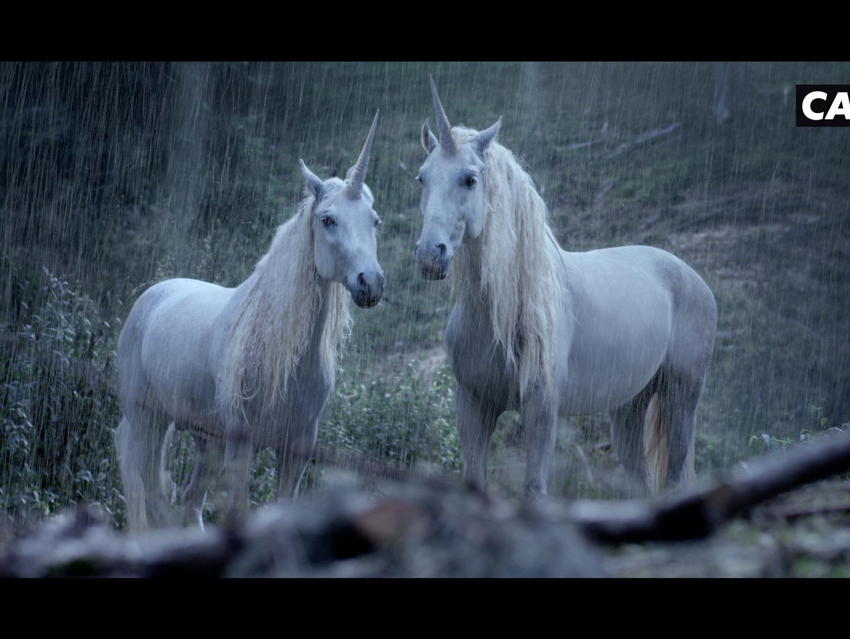 Unicorns Thumbnail