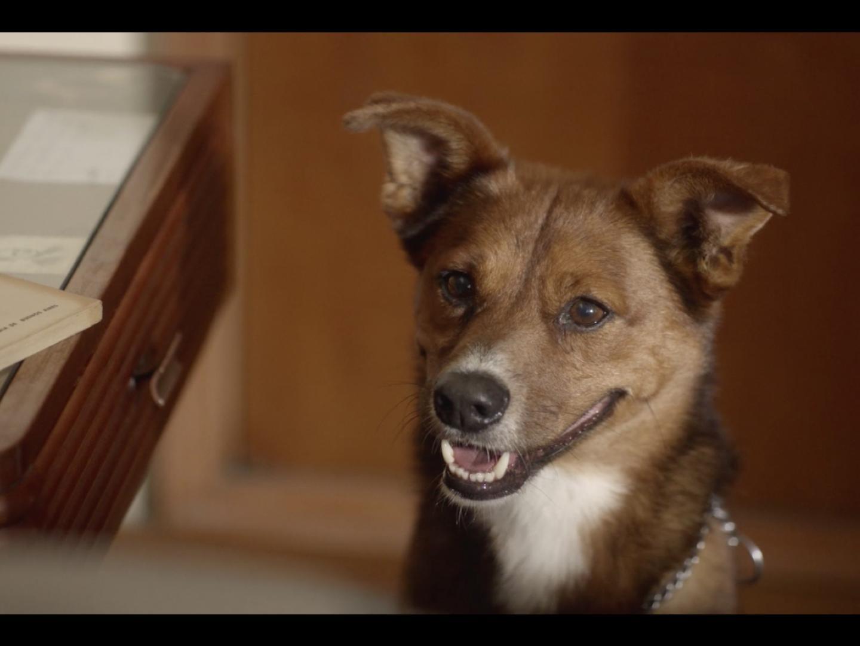 The Man & The Dog Thumbnail