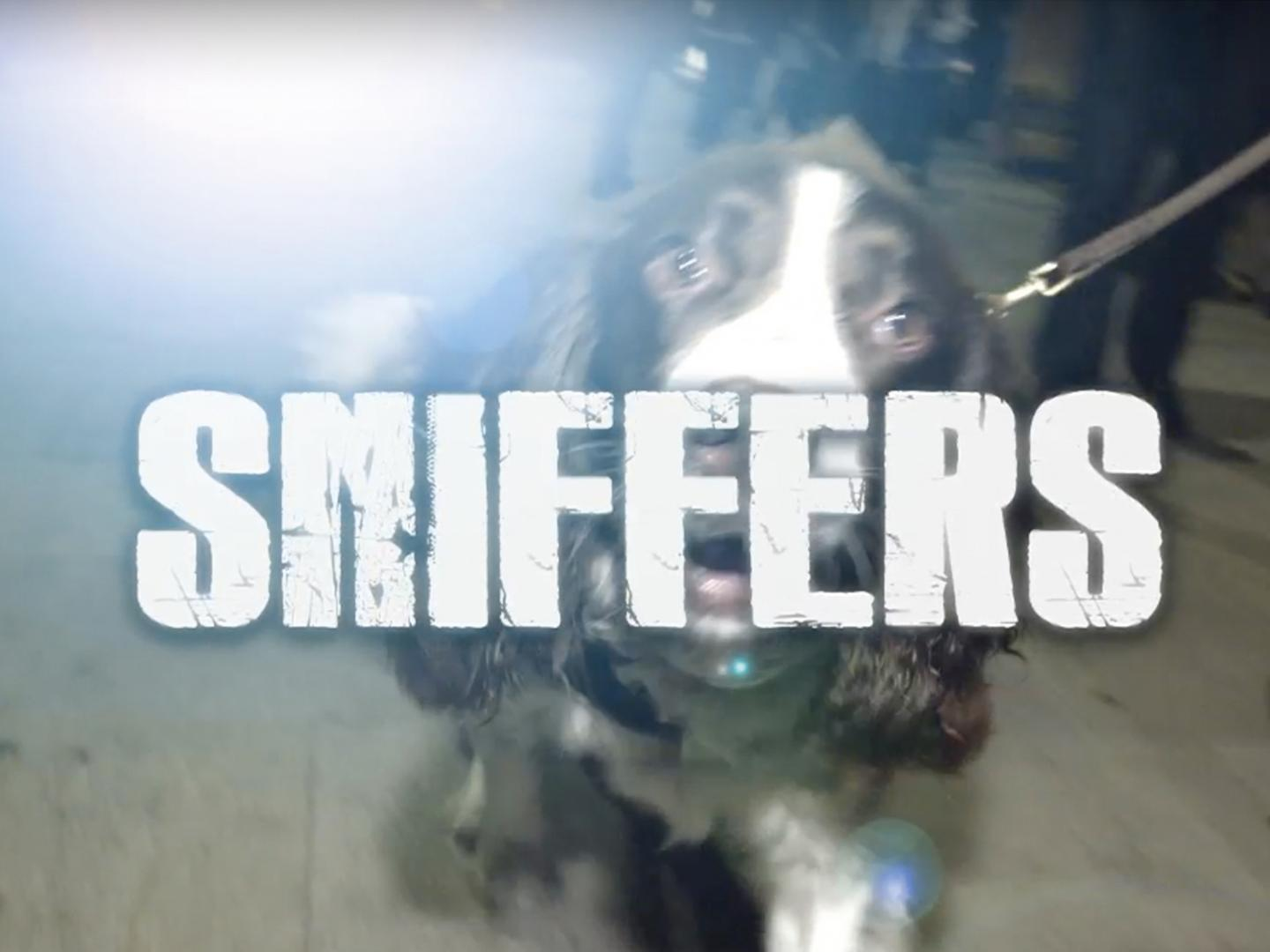 Sniffers Thumbnail