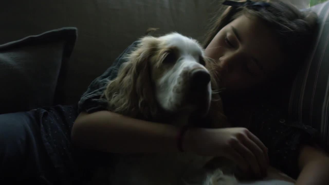 Thumbnail for DogCheck
