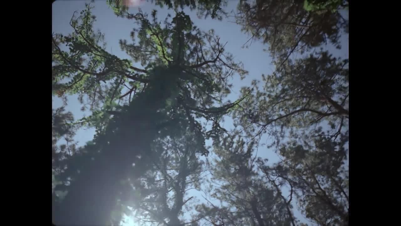 Thumbnail for Never Still l Nobu Mastuhisa - Director's Cut