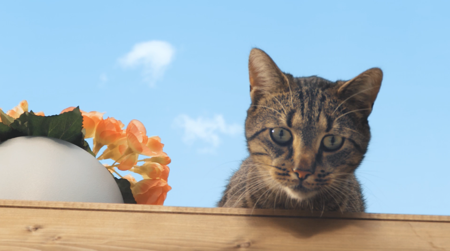 Thumbnail for Tenacious Cat