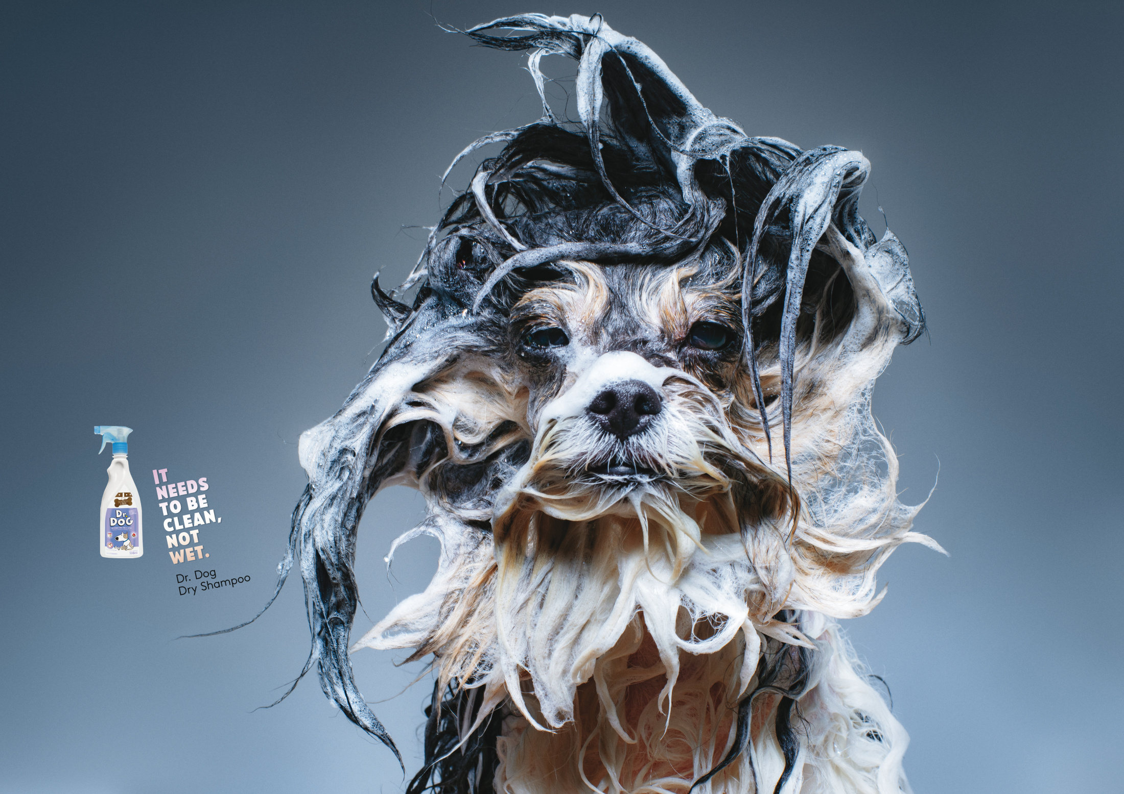 Image Media for Wet Dogs 1
