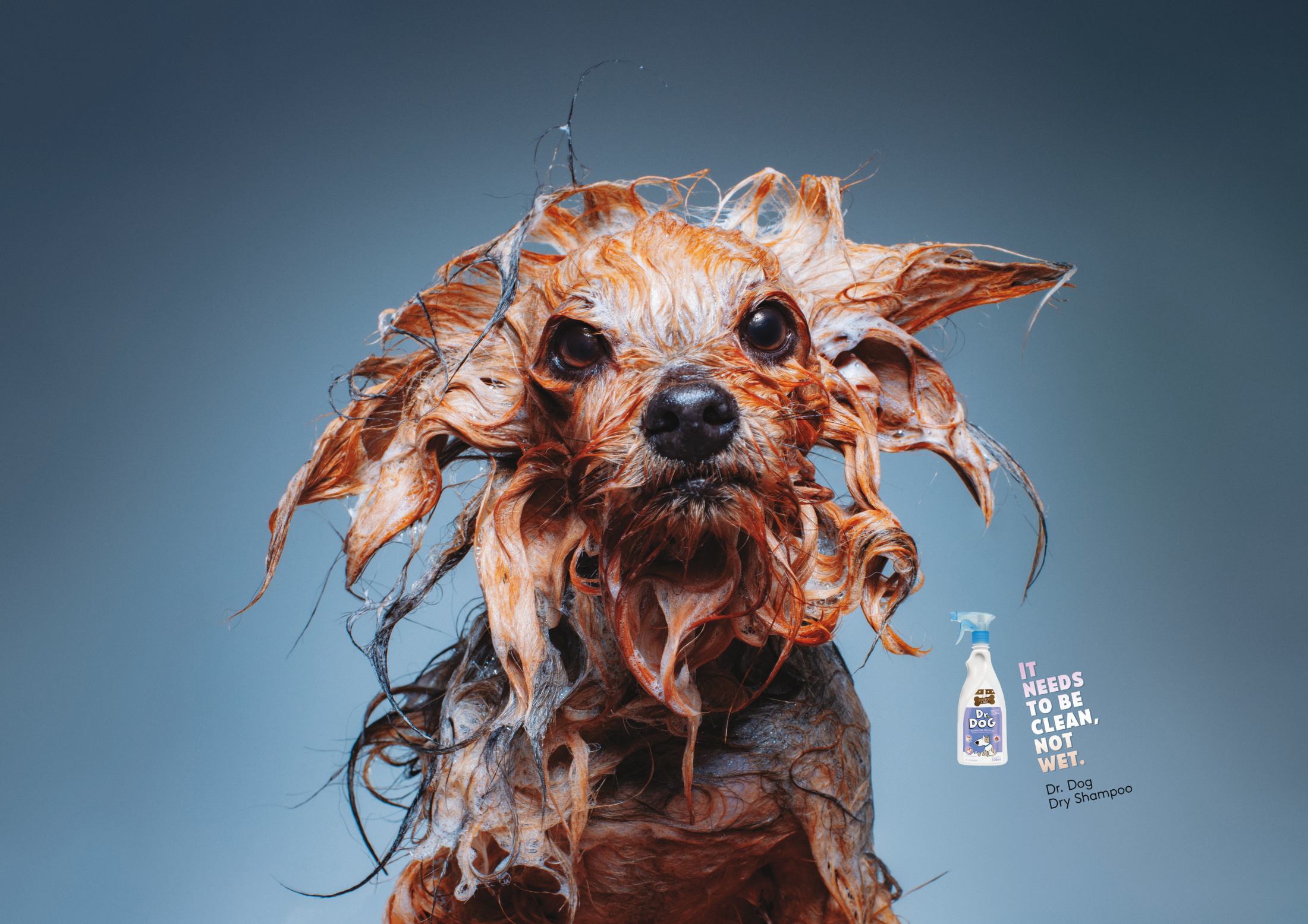 Image for Wet Dogs 2