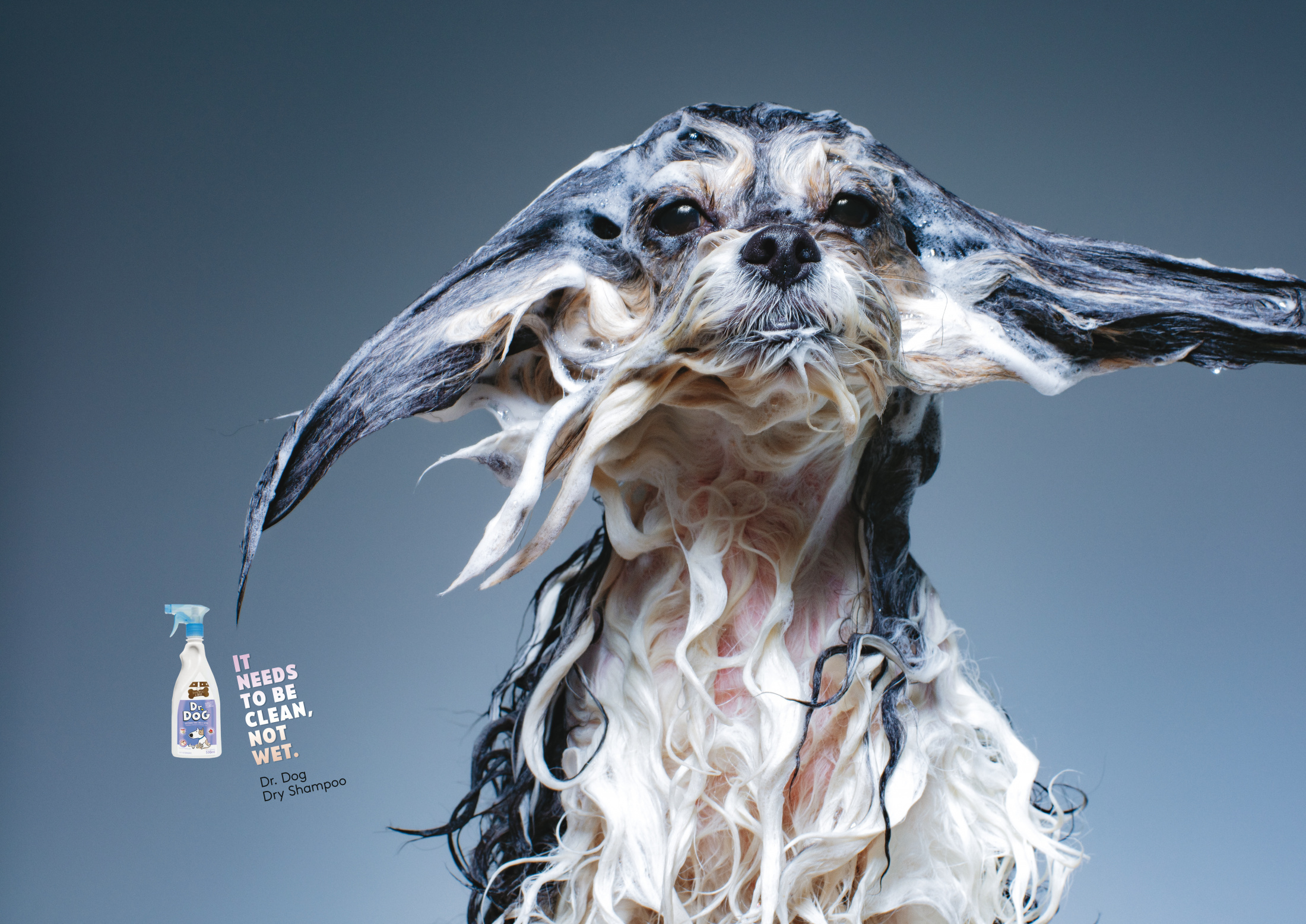 Image Media for Wet Dogs 3