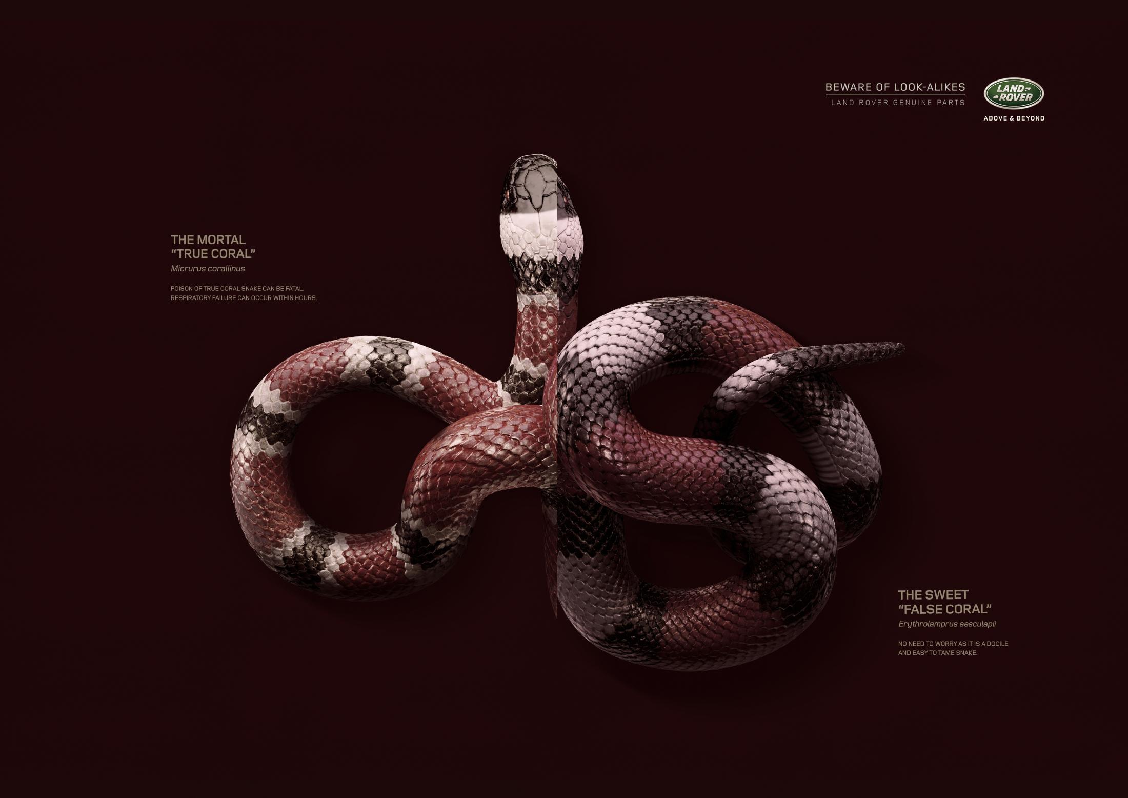 Thumbnail for Snake