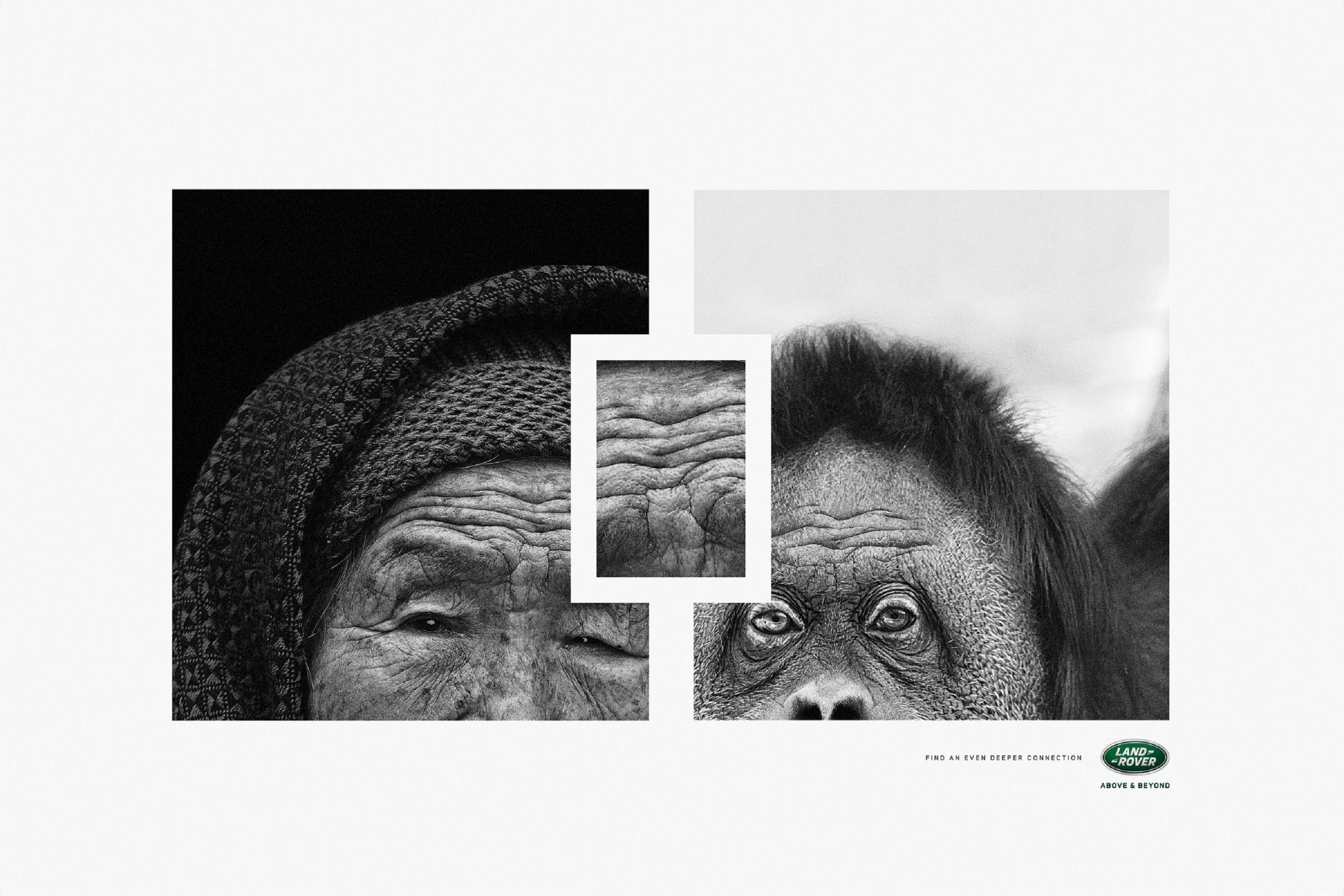 Thumbnail for Ape