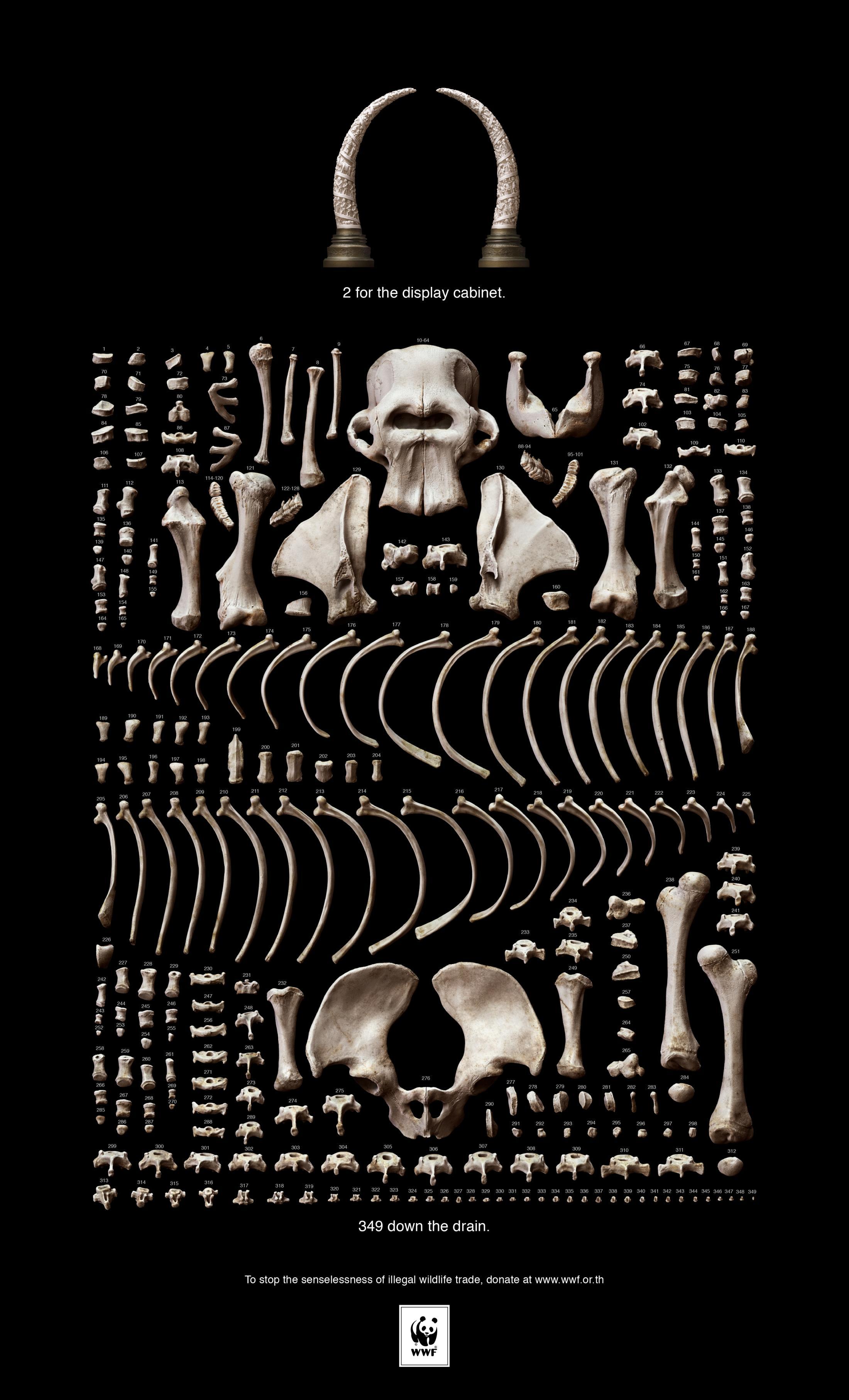Thumbnail for Bones