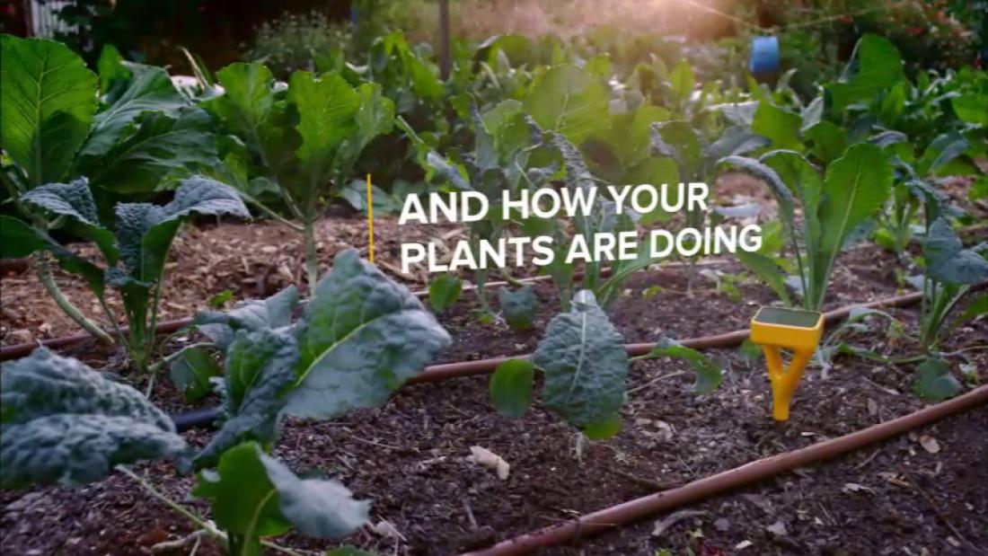 thumbnail for edyn garden sensor - Edyn Garden Sensor