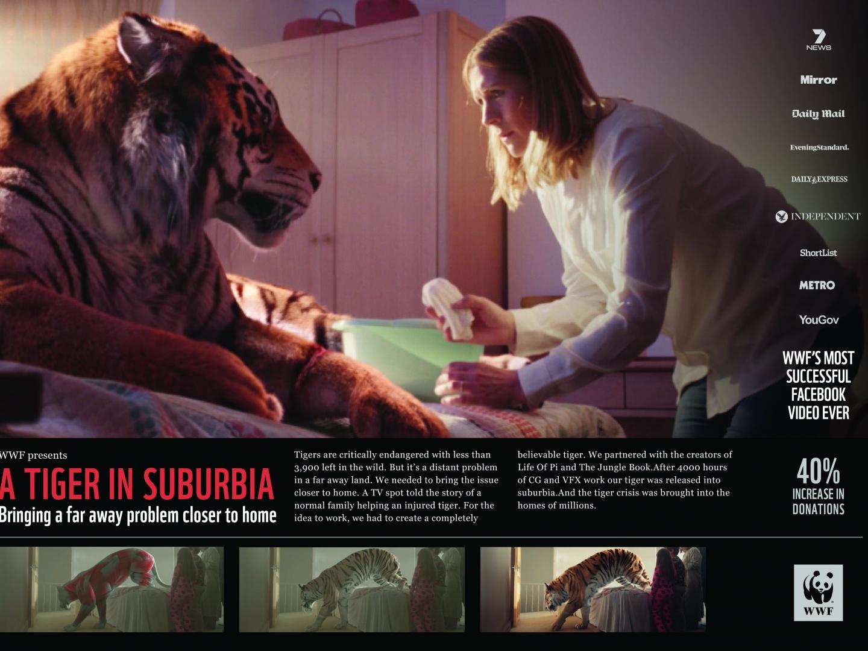 A Tiger in Suburbia  Thumbnail