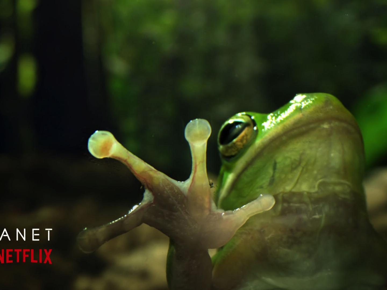 Frog Thumbnail