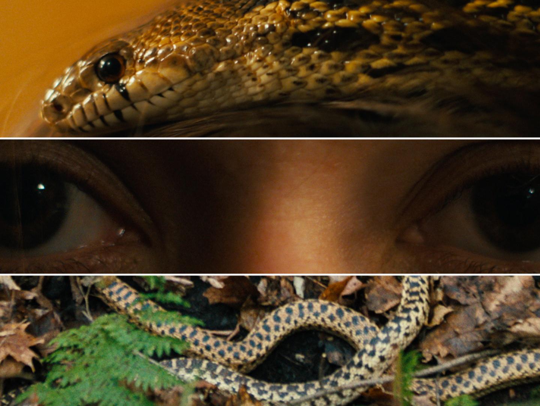 Serpent Thumbnail