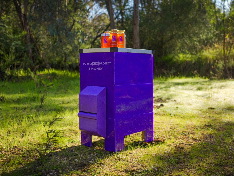 The Purple Hive Project Thumbnail