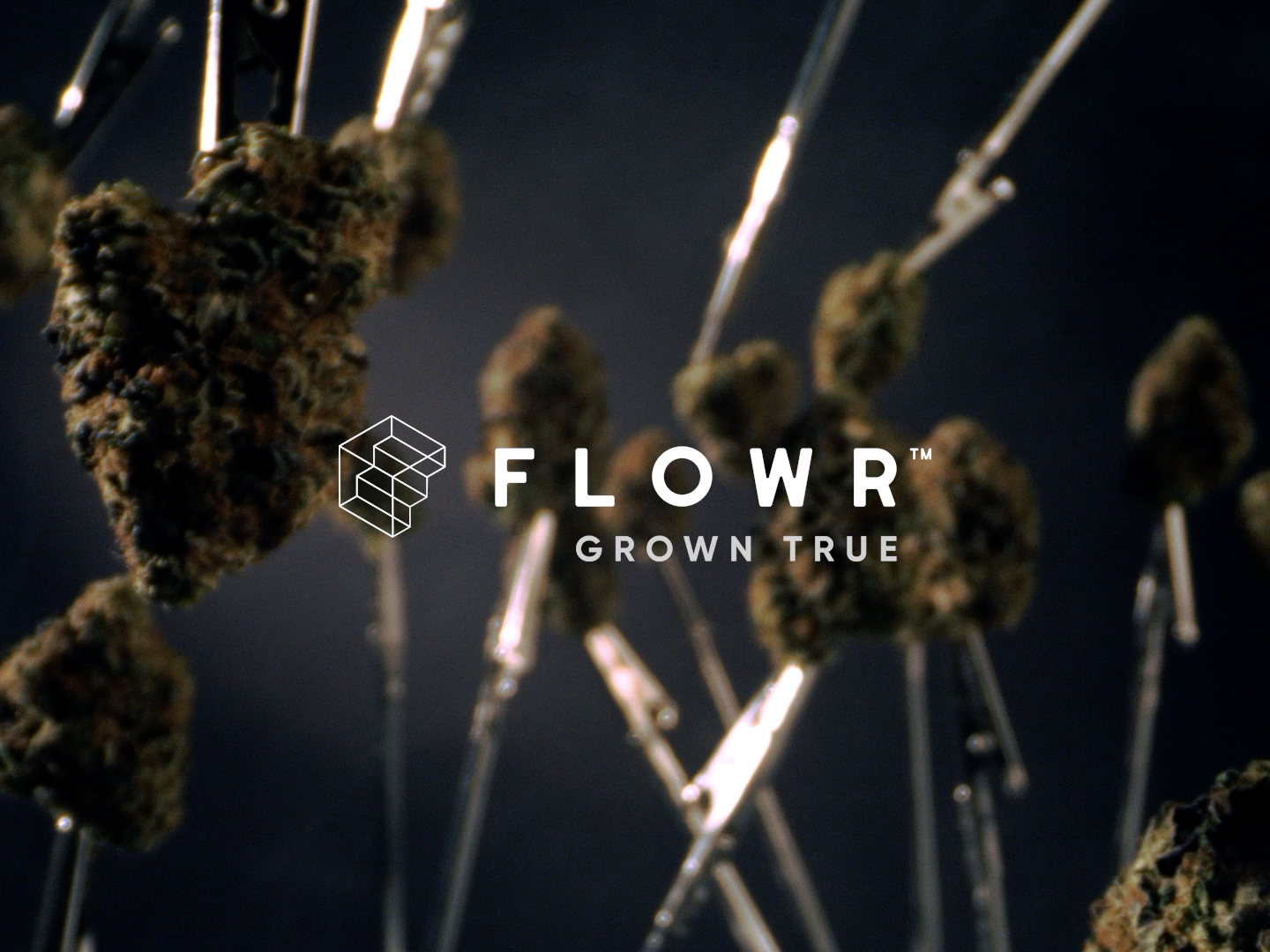 The Flowr Corporation: Nothing Special | Flowr BC Pink Kush