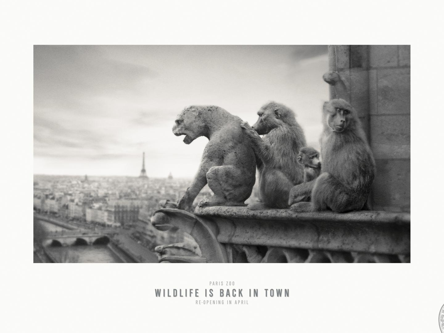 Image for Notre Dame de Paris