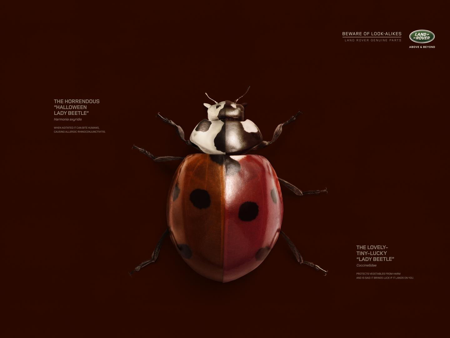 Image for Beetle