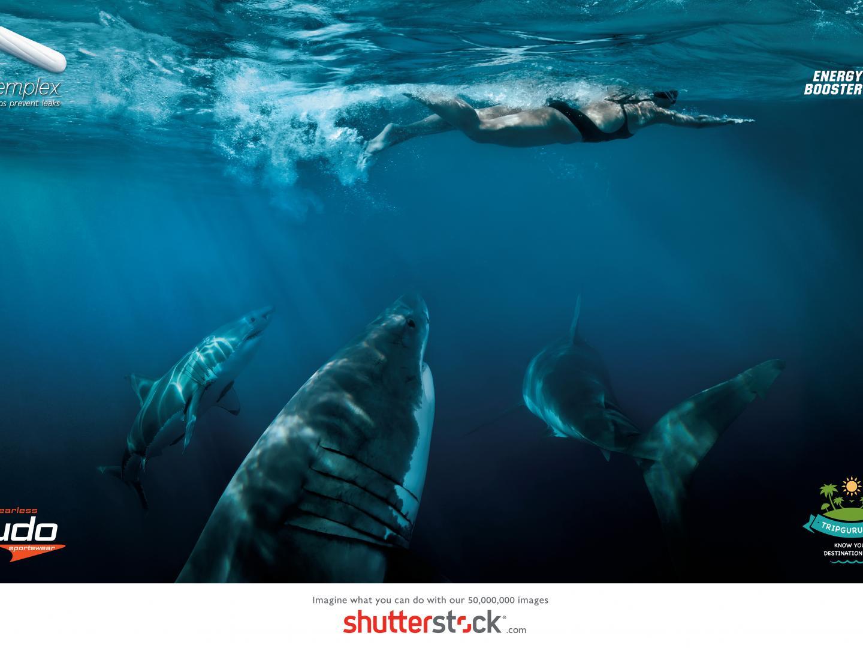 Shark Thumbnail