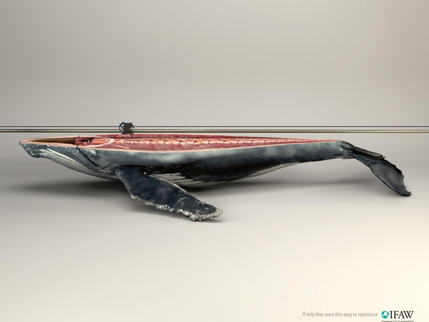 Image for 3D Printer/whale