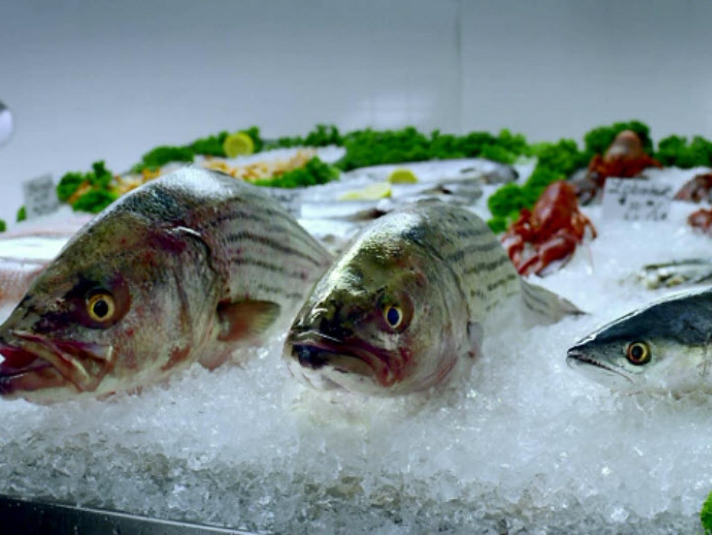 Take It From A Fish - Spanish Mackerel Thumbnail