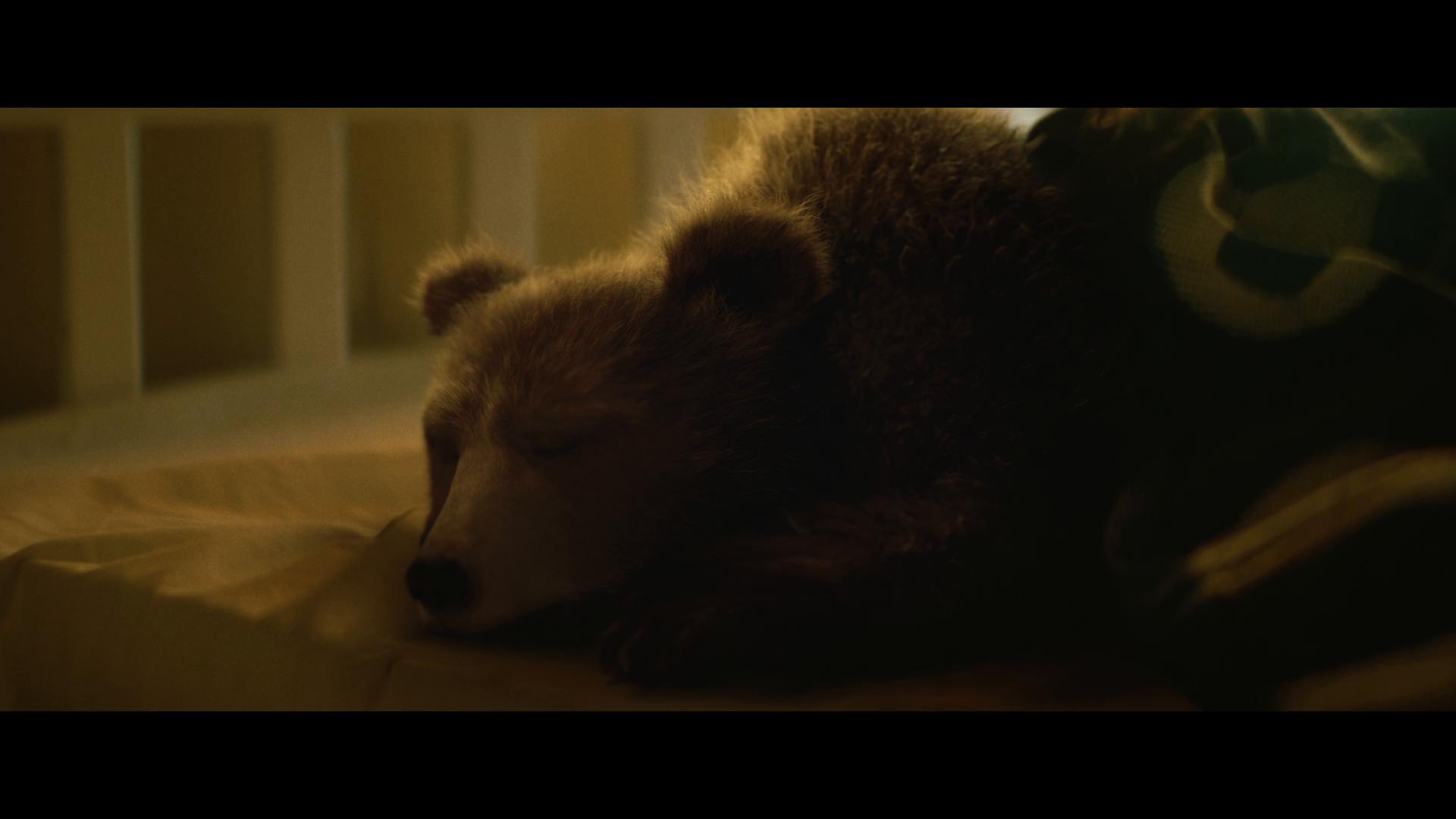 Thumbnail for Bears