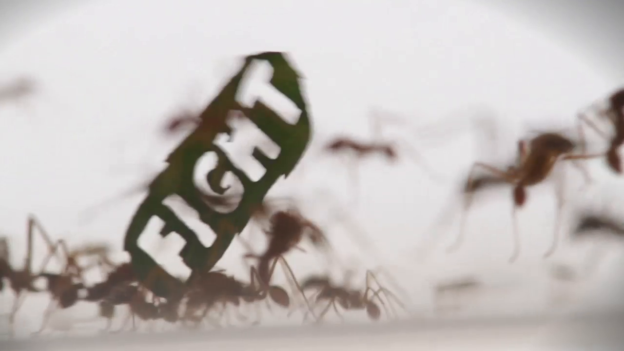 Thumbnail for The Ant Rally